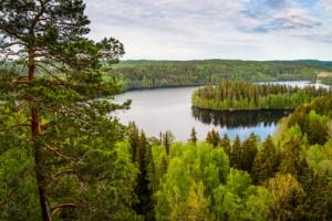 Ein wunderschöner Ausblick auf ein Waldgebiet mit einem See.